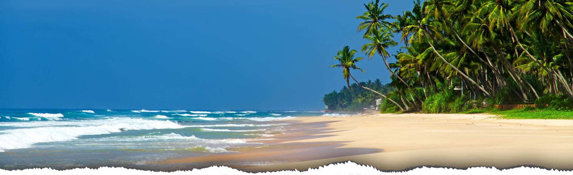Tourism sector to bounce back stronger BFT-srilanka-Cover-image